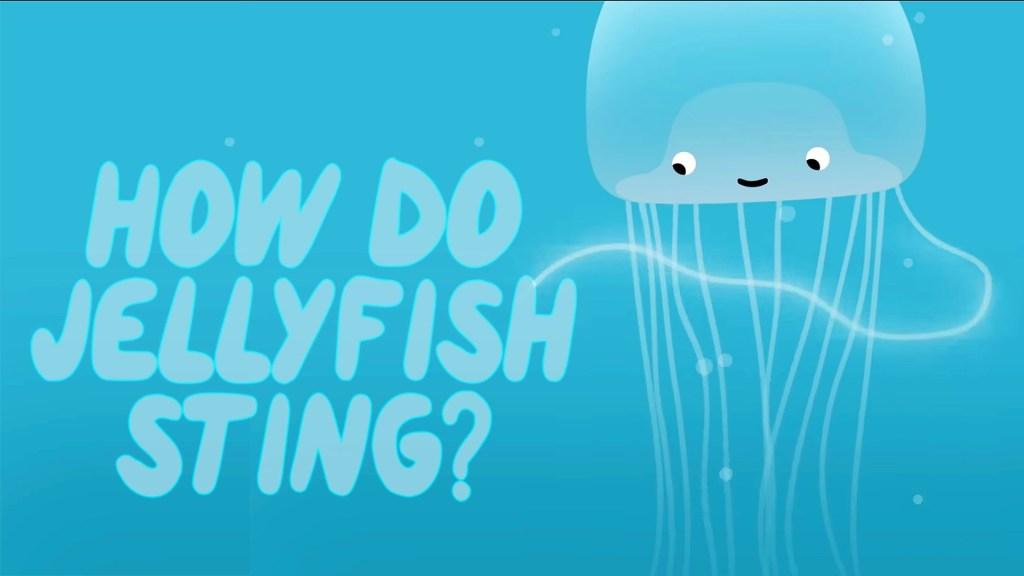How do jellyfish sting...