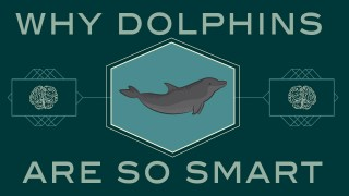How smart are dolphins?