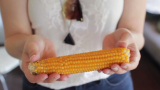 From seed to snack – How to Make Popcorn on the Cob