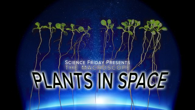How do plants grow in space? – Science Friday