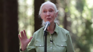 Jane Goodall inspires kids at Berkeley's Redwood Grove