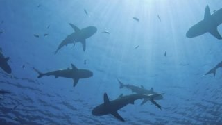 Mimicking shark skin to combat superbugs – Think Like a Tree