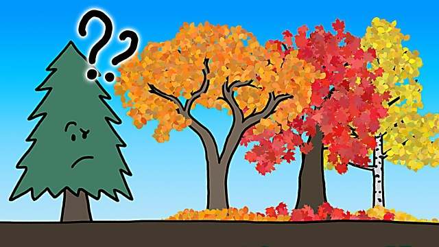 The Real Reason Leaves Change Color In the Fall – MinuteEarth
