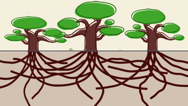 Think Like a Tree – Problem solving with nature's best ideas