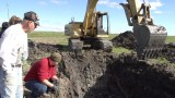 Woolly mammoth remains discovered in a Michigan field