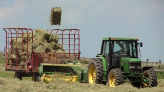 A  kick baler sends fresh hay bales flying on the farm