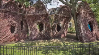 Patrick Dougherty's Stickwork in Salem and Sausalito
