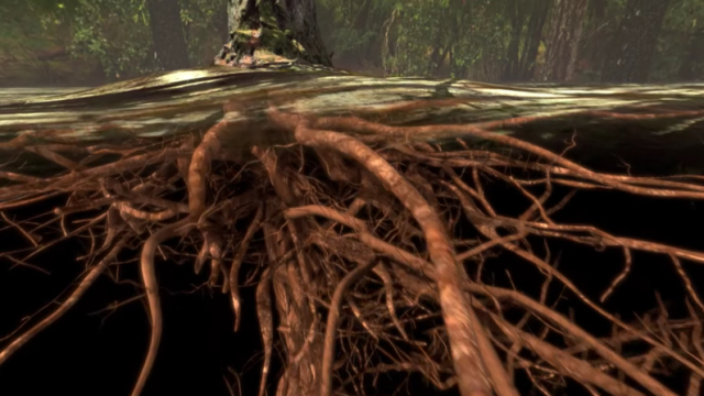 How Do Trees Transport Water from Roots to Leaves?
