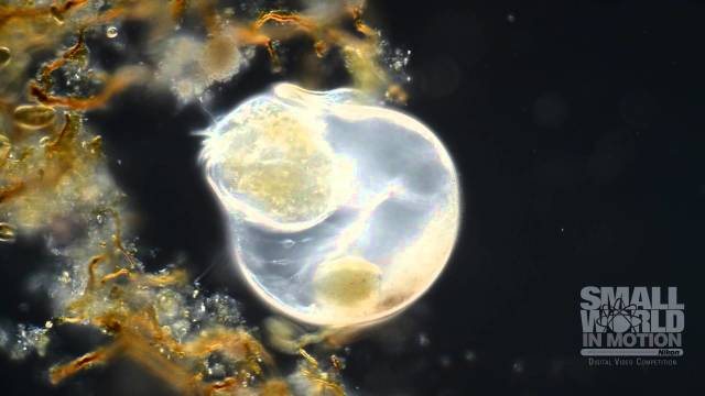 Wim van Egmond's award-winning microscopic videos