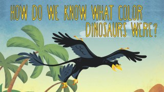 How do we know what color dinosaurs were?