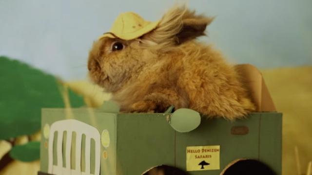 Bunny & guinea pig adventures – Hello Denizen