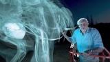 A titanosaur in 360° VR with Sir David Attenborough