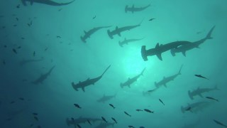Tour the Galápagos Islands' new marine sanctuary
