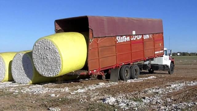 A Slaton Co-op Gin truck easily flips 20,000lbs of cotton