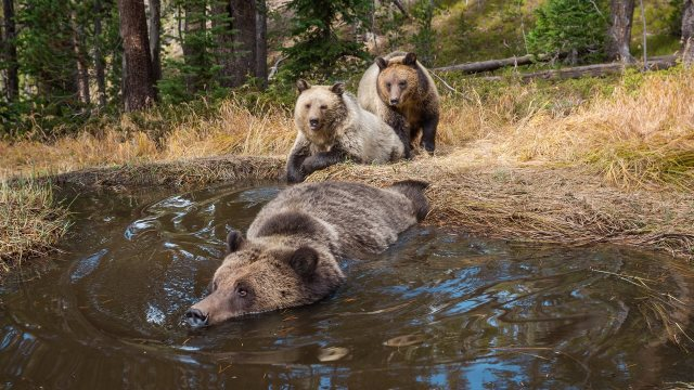 The 'Bear Bathtub' in Yellowstone National Park