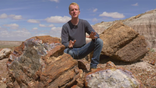 Petrified Forest National Park & how petrified wood is made
