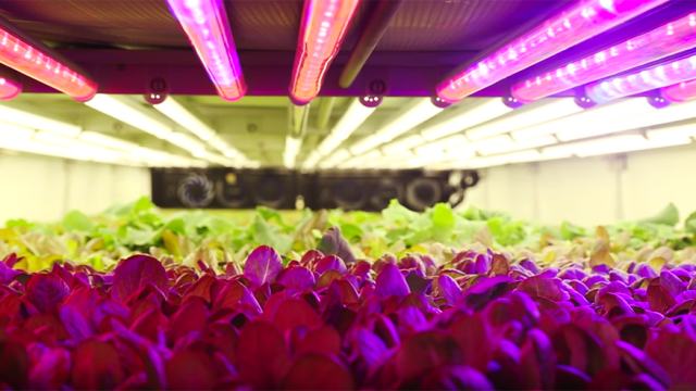 Aeroponic vertical farming in Newark, New Jersey