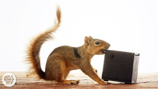 Watch These Frustrated Squirrels Go Nuts – Deep Look