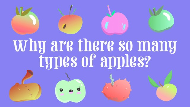 Why are there so many types of apples?