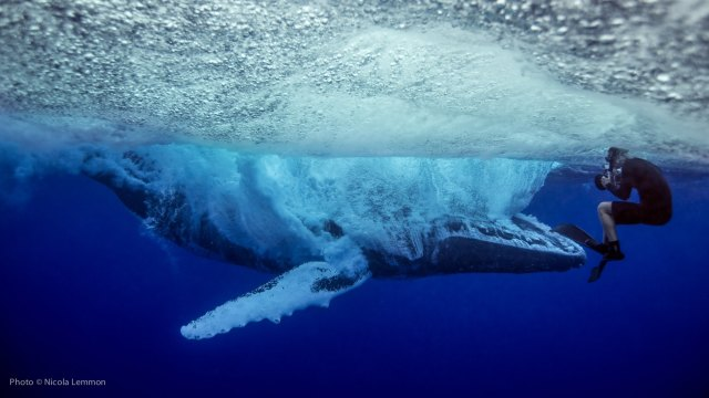 Up close and underwater as a humpback whale breaches