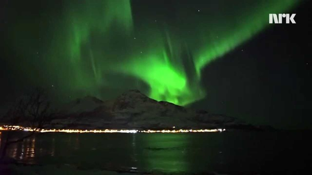 Humpback whales swim under the northern lights