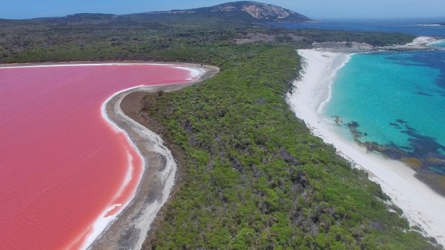 Why is Lake Hillier pink?