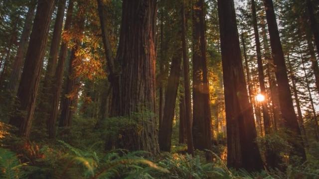 MTJP | Redwood –More Than Just Parks