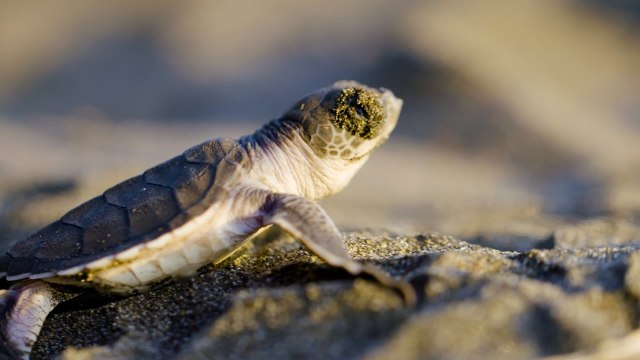Meet The Team Protecting Costa Rica's Sea Turtle Mecca