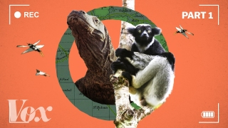 How the BBC makes Planet Earth look like a Hollywood movie