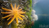 Under The Dock, a marine life series by Hakai Institute
