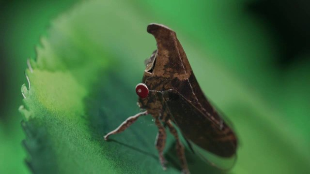 Invisible Nature: Code of the Treehopper