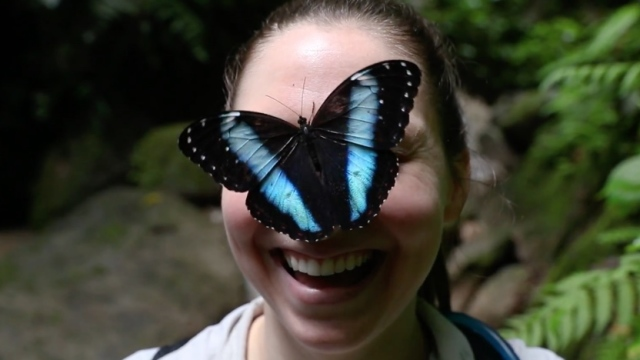 Catching butterflies with the longest butterfly net in the world