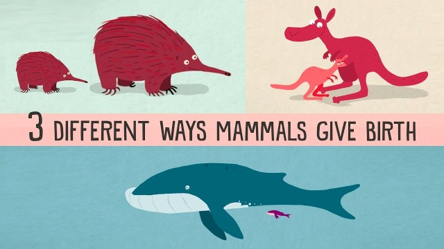 The three different ways mammals give birth