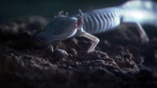 Troglobites: Strange Cave Specialists – Planet Earth