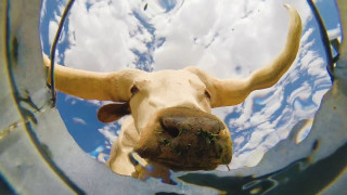 Animals drinking water, captured by an underwater bucket cam