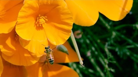 Can Mushrooms Save the Honey Bee? – bioGraphic