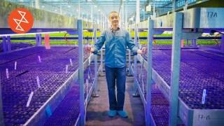 Inside Montreal's Zero Waste Urban Greenhouses