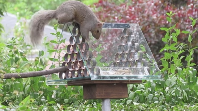 How to Make a Squirrel Proof Bird Feeder