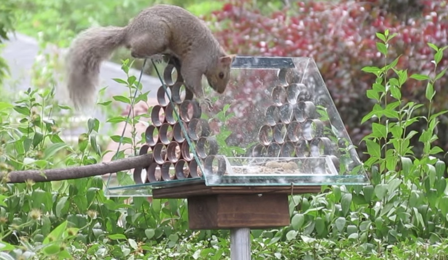 How To Make A Squirrel Proof Bird Feeder The Kid Should