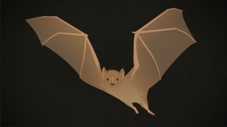 Vampire Bats: Bloodthirsty … and Cuddly – Skunk Bear