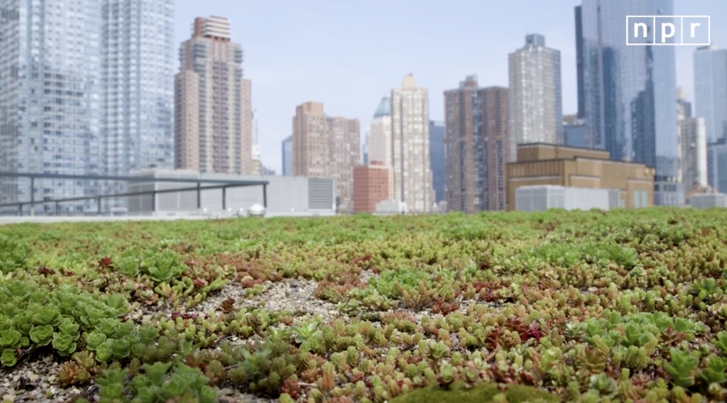 Do. Green Roof Nyc ...