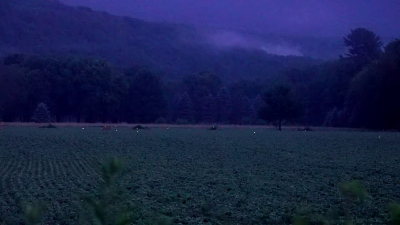 Fireflies Sparkle In A Pennsylvania Field At Dusk The Kid Should