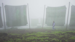 Catching fog to help combat Peru's water shortage