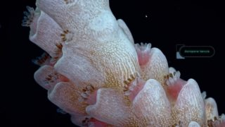 Coral Spawning at Australia's National Sea Simulator