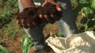 Transforming Human Poop Into Eco-Friendly Fertilizer
