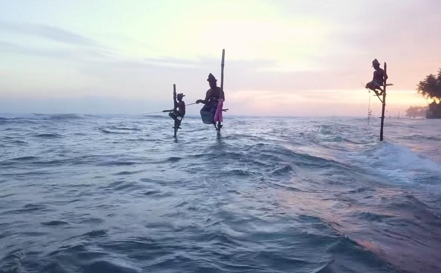 Stilt fishing in Sri Lanka
