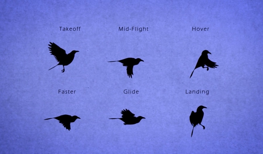 Bird Flight For Animators The Kid Should See This
